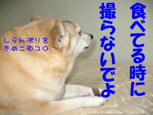 Img_0859_2